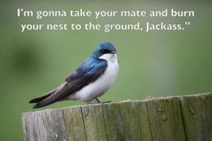 Bluebird swearing.